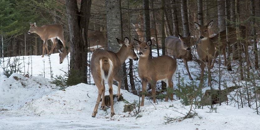 Hunting violation in Ontario costs MacTier man $2,500